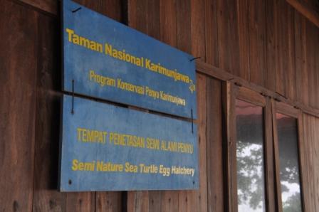 Penetasan Semi Alami Penyu di TN Karimunjawa