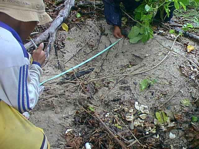 Pengukuran Lokasi Sarang Penyu di Pulau Seruni